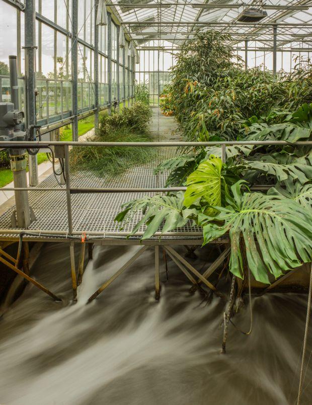 Greenwakphoto 1. díj megosztva: Makai Gábor // Élőgépes víztisztítómű, Dél-pesti Szennyvíztisztító
